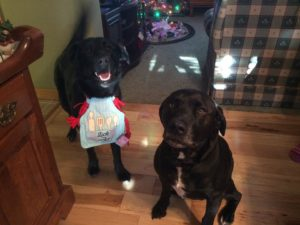 Customer Testimonials - You'll Love Us Too | DogWatch® by