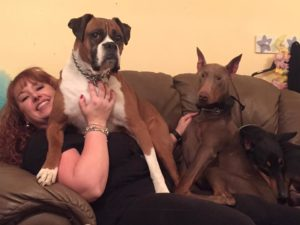 Harley the Boxer and Apollo and Athena the Doberman Pinschers with mom Elescia